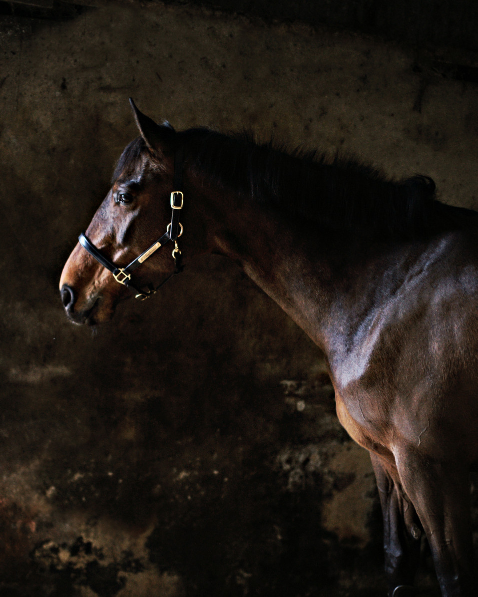 Delphine-McCracken-Photography-Loughview