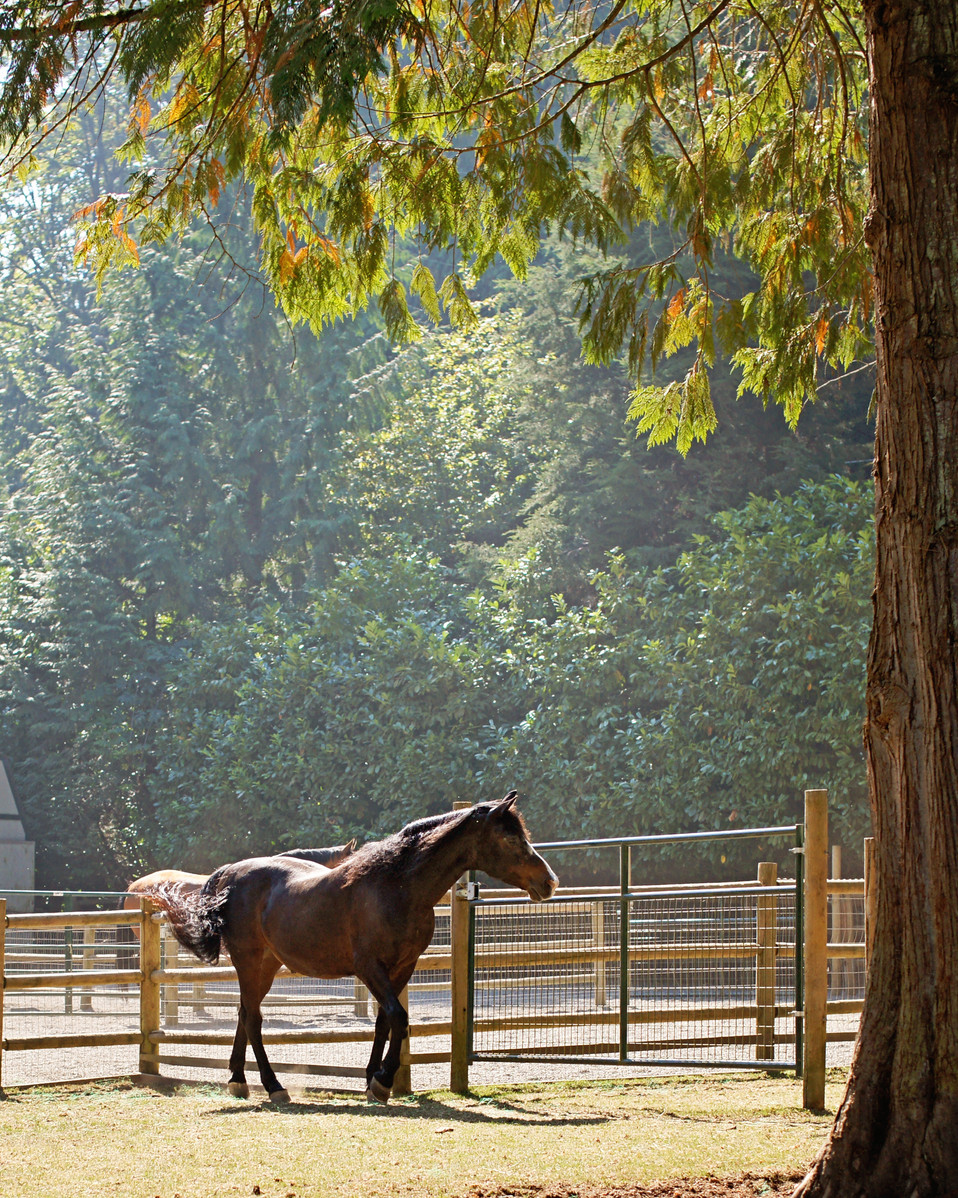 Holsteiner-Inspection-Equestrian-Photogr