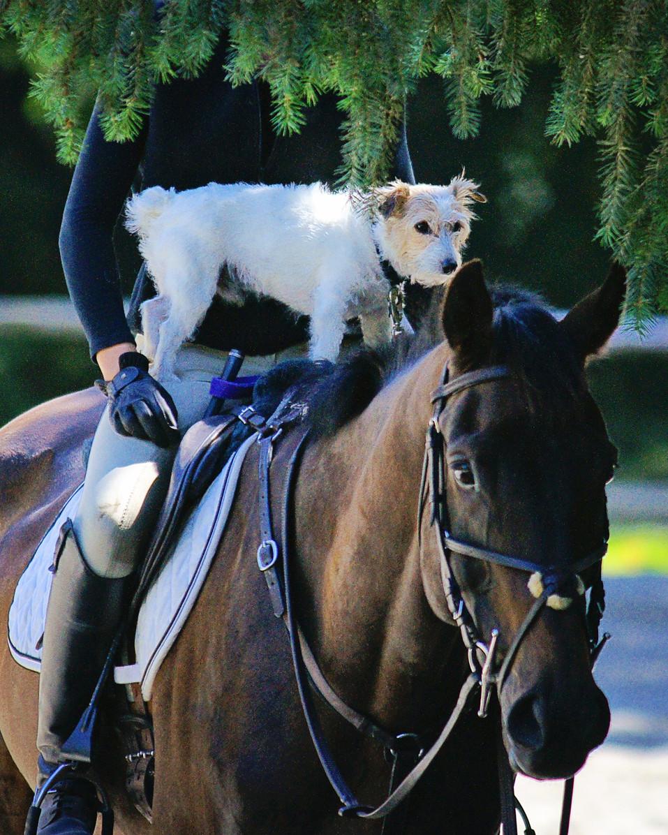 LWSC-Jumper-Horse-Show-July28-Equestrian