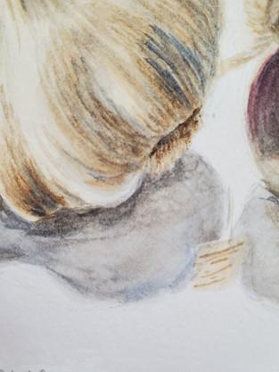 Watercolor Garlic Detail