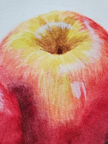 Watercolor of Apples Detail