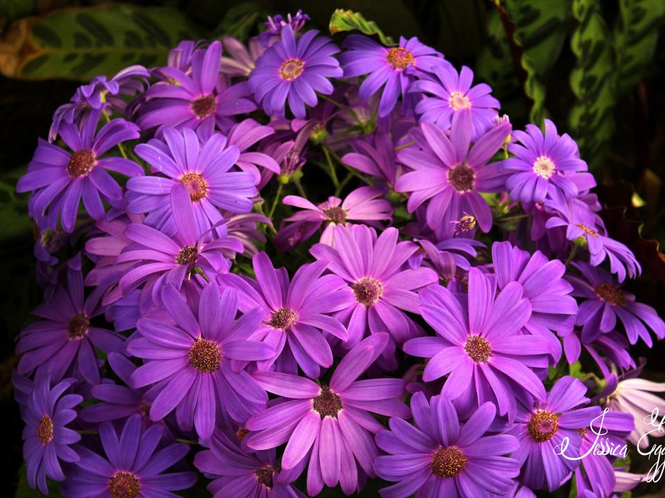 Purple Perfection