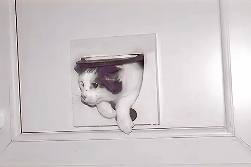 cat coming through a cat flap