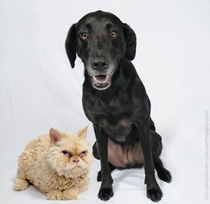 PetCare of Newberry old dog and cat pic.