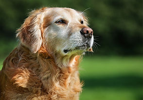 PetCare of Newberry old dog pic.jpg