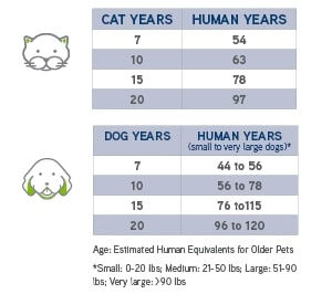 dogs-cats-in-human-years.jpg