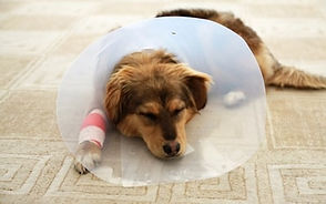 PetCare of Newberry old dog cone pic.jpg