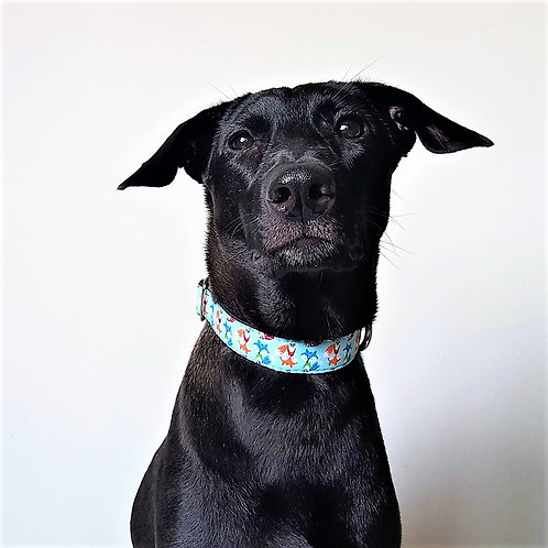 "Foxy Roxy - Satin lined Buckle Collar - 1"" & 1.5"" width"