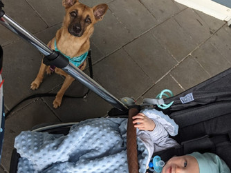 Bringing home baby to meet your dog - Sunny and Felix