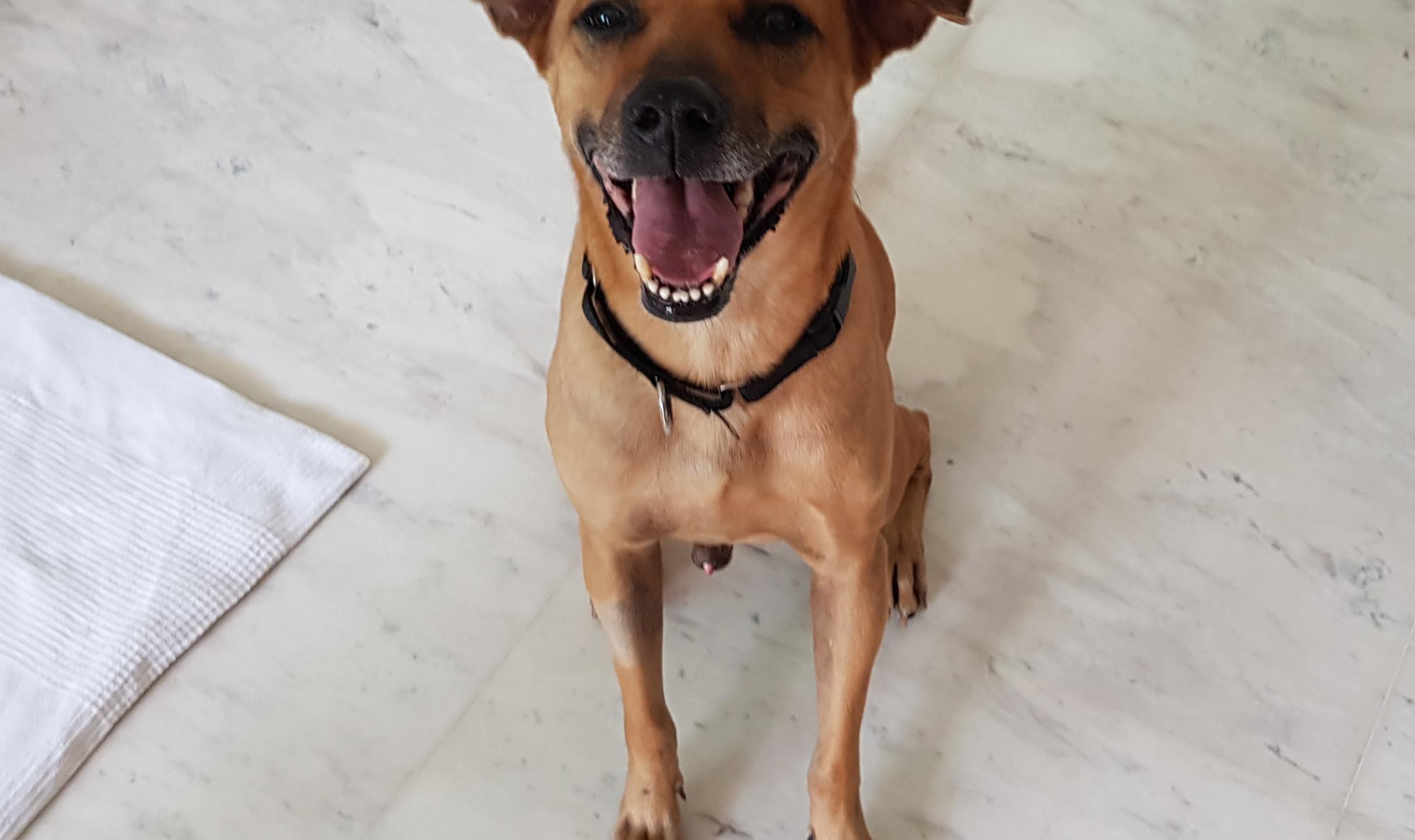 Adopted Dog Camper