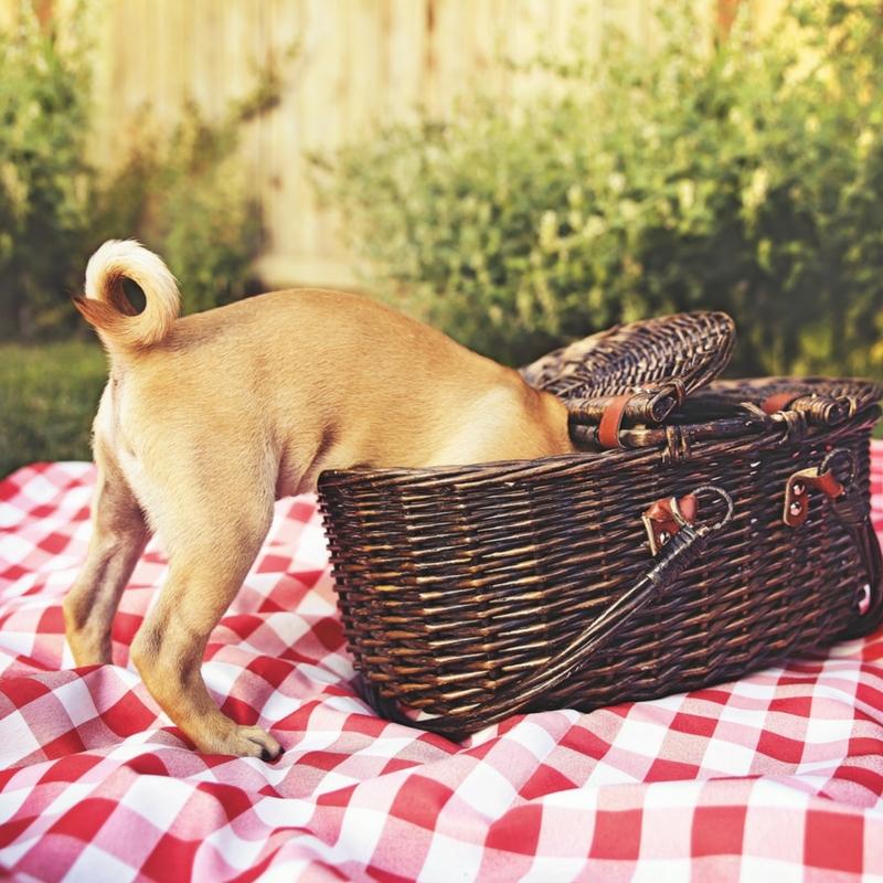 dog-picnic-basket insta