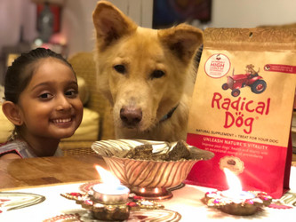 Healthy dog treats to add cheer this festive season & beyond