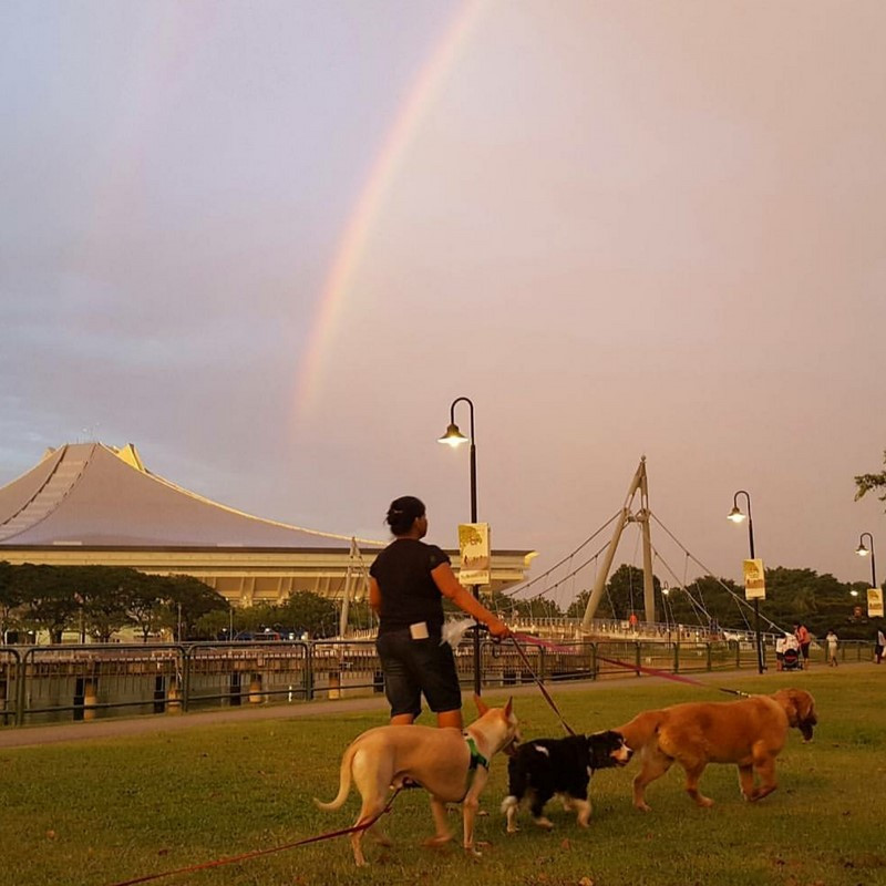 Rainbow bridge Lessons from our dogs