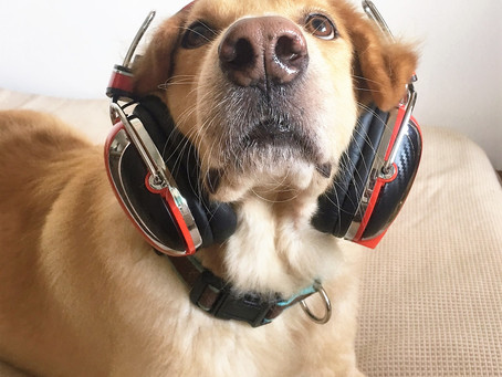 Protecting your pet from noise pollution