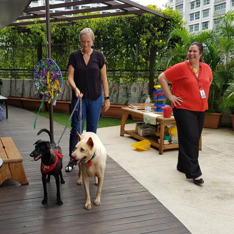 OSCAS dogs Pango & Mack Mack