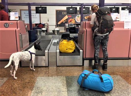 Moving Countries with your Pet Series: Singapore to Germany