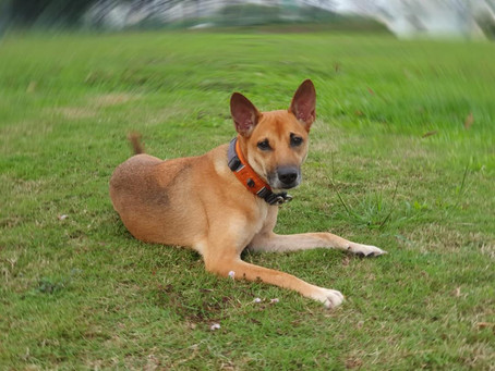 Health Care for Aging Dogs: Incontinence and Kidney issues