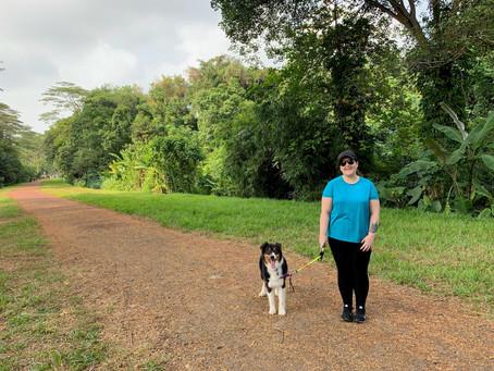 Moving Countries with your Pet Series: Australia to Singapore | Singapore to Australia