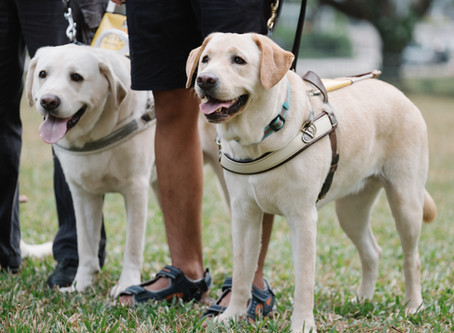 Guide Dogs Singapore needs your support