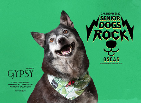 Senior Dogs Rock! How a $10 Calendar can make a world of difference.