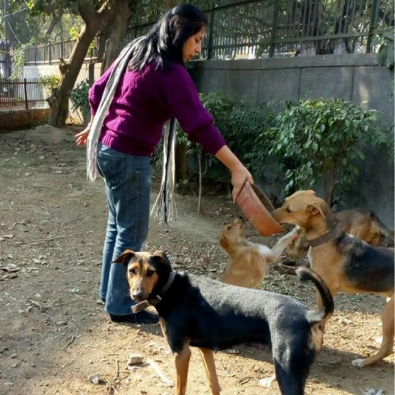 Alpana Delhi street dogs
