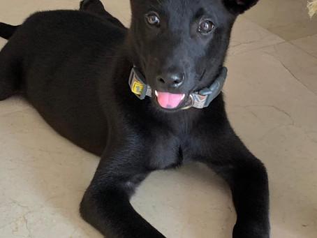 Puppy training tips from Anita, including DIY Dog Toy idea