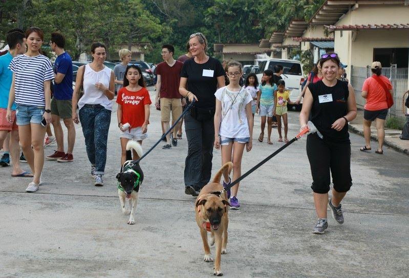 Vollie walking dogs