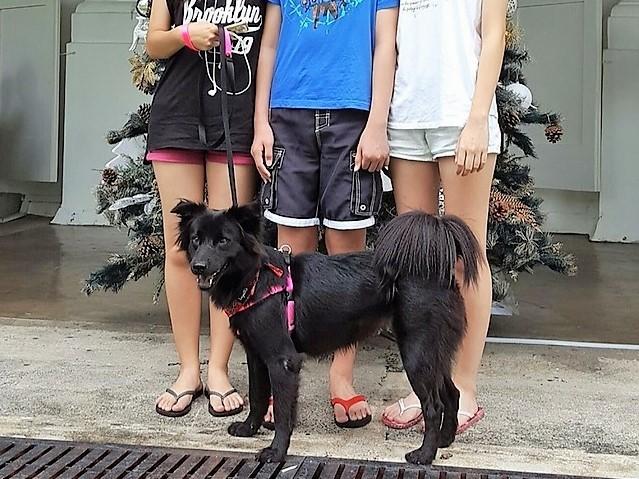 Adopted HDB dog Ling Ling