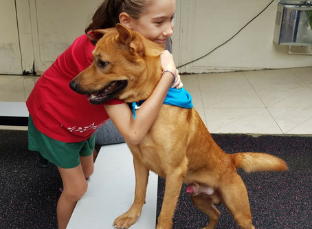 Shelter dogs steal the show at EtonHouse Broadrick's School carnival