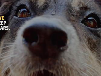Top Five Reasons to Adopt a Senior Dog