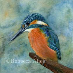 Kingfisher WM small