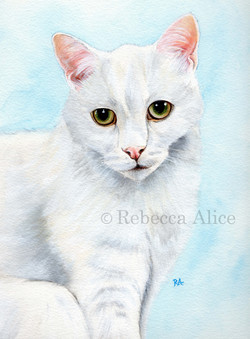 'Oscar' the White Cat