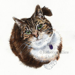 Daisy the Tabby Cat
