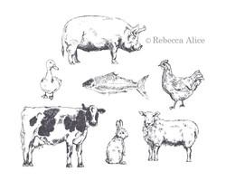 animals WM