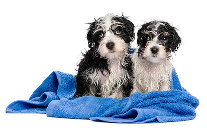 Puppy baths