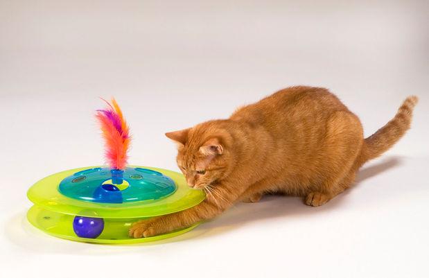 Cat Playing.jpg