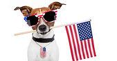 Fourth of July dog.jpg