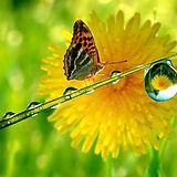 butterfly-flower-waterdrop-1440x900.jpg