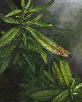 """Rosemary"", acryl painting"