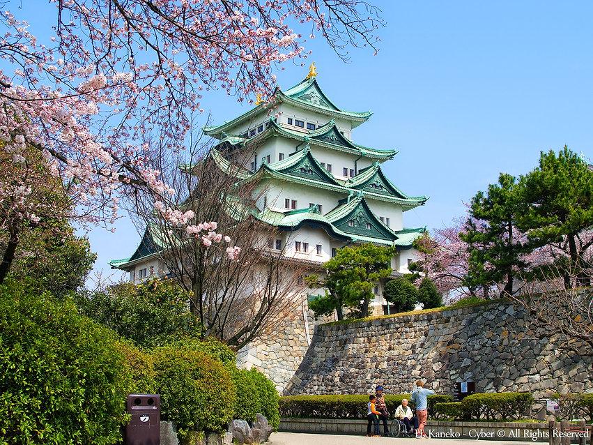 桜と名古屋城(Nagoya_Castle_with_Cherry_blossom