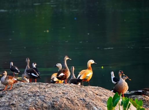 Salim Ali Biodiversity Park: Paradise threatened