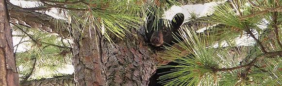 Contact Montana Forest Stewardship Foundation