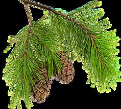 Forest Stewardship Foundation Membership