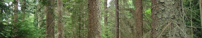 Montana Forest Stewardship Foundation Board Members
