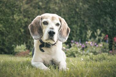 Een portret van mijn hond, Imca.