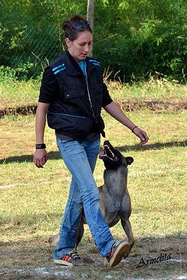 DOGZWAY - Education canine