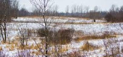 elm-creek-park-maple-grove-mn.jpg