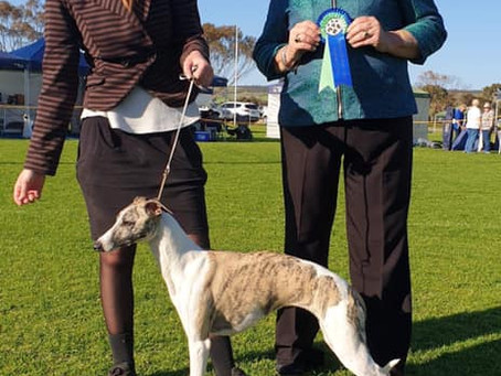 Murray Valley Kennel Club