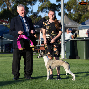 Rikka at 11.5 months winniing BEST IN GROUP 4TH and Puppy In Group