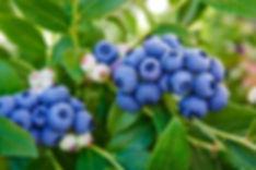 blueplant1003180201.jpg